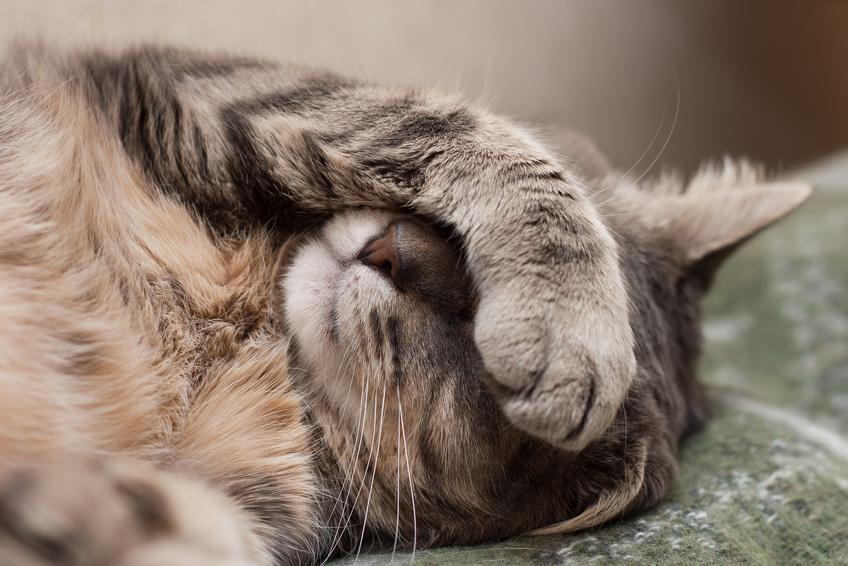 Mieux dormir grâce aux différents cycles du sommeil